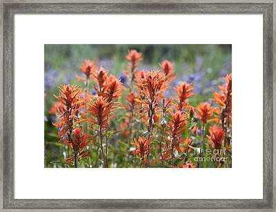 Red Wildflowers Framed Print