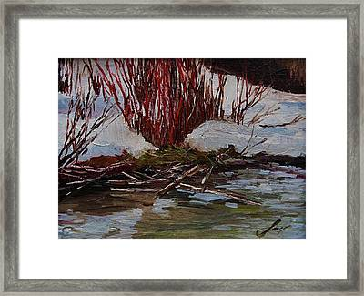 Red Willows Framed Print by Suzanne Tynes