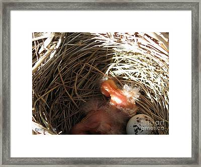 Red-winged Blackbird Babies And Egg Framed Print by J McCombie