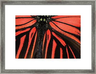 Framed Print featuring the photograph Red Wings by Sonya Lang