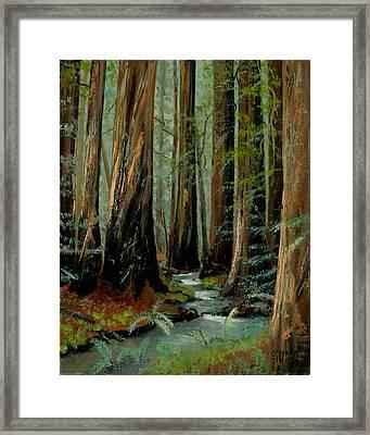 Redwood Forest Stream Framed Print