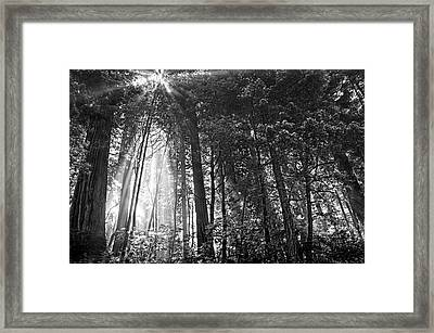 Red Woods 2 Framed Print by Thomas Born