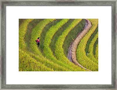 Red Yao Girl On The Rice Terrace Framed Print by Keren Su