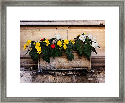 Red Yellow And White Begonias Framed Print by Louise Heusinkveld