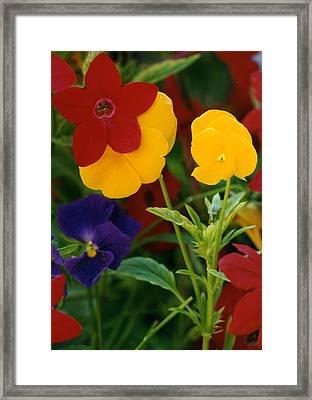 Red Yellow Purple Flowers Framed Print by Robert Lozen