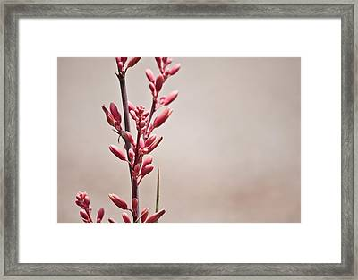 Red Yucca Framed Print by Swift Family