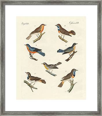 Redbreasts Bluethroats And Yellowthroats Framed Print by Splendid Art Prints