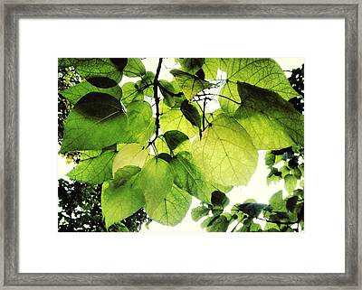 Catalpa Branch Framed Print