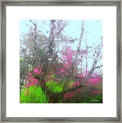 Redbud Trees Framed Print