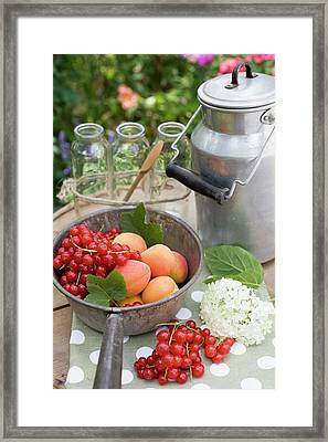 Redcurrants, Apricots, Bottles, Can On Garden Table Framed Print