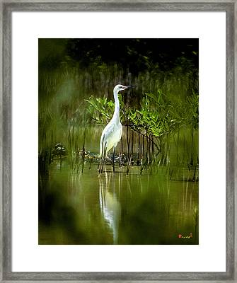 Framed Print featuring the photograph Reddish Egret 9c by Gerry Gantt