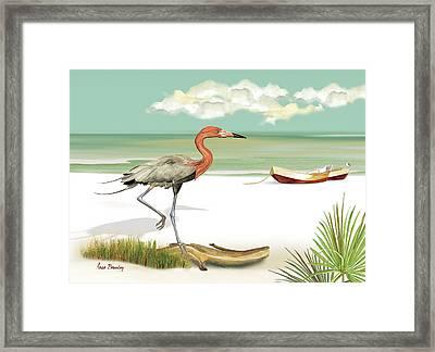 Reddish Egret Framed Print by Anne Beverley-Stamps