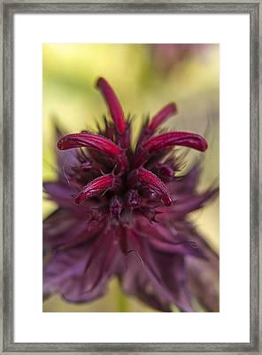Reddish Framed Print