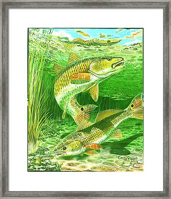Redfish Haven In0018 Framed Print