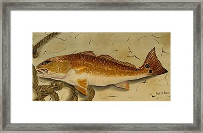 Redfish In The Boat Framed Print by Phyllis Beiser