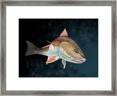 Redfish Inspection Framed Print
