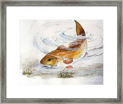 Redfish Framed Print