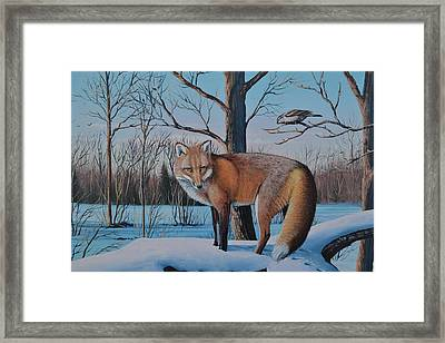 Redfox And Chickadee Framed Print