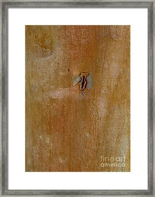 Redgum Tree Framed Print by Steven Ralser