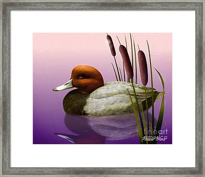 Redhead And Cattails Framed Print
