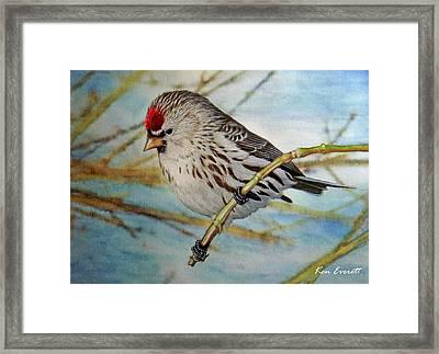 Redpoll   Framed Print by Ken Everett