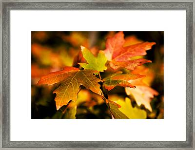 Reds Framed Print by Chad Dutson