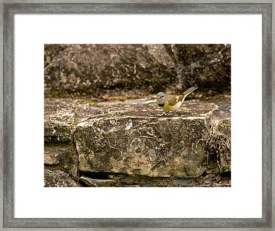 Redstart In Ruins Framed Print