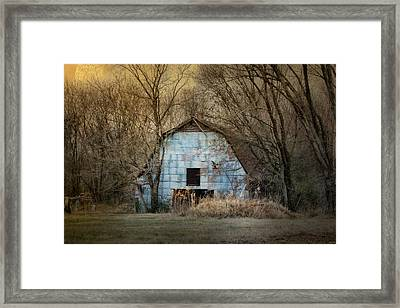 Redtail At The Blue Barn Framed Print by Jai Johnson