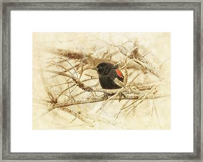Redwing In The Wind Framed Print