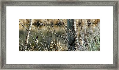 Redwing Framed Print