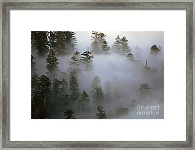 Redwood Creek Overlook With Giant Redwoods  Framed Print
