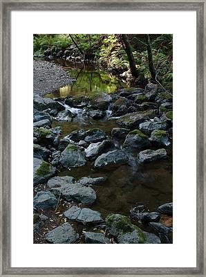 Redwood Creek Framed Print