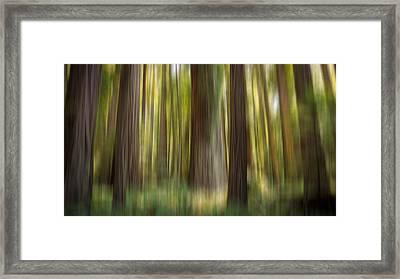 Redwood Dream Framed Print