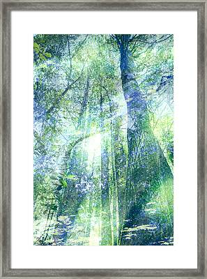 Redwood Dreams Framed Print by Nicole Swanger