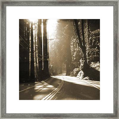 Redwood Drive Framed Print by Mike McGlothlen