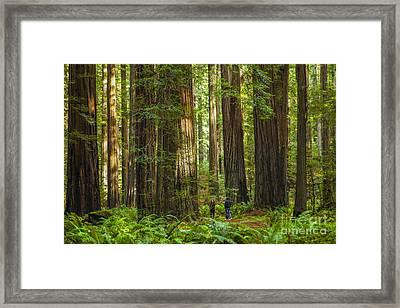 Redwood Forest Framed Print by Diane Diederich