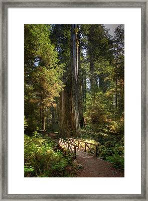 Redwood Forest On A Perfect Spring Day Framed Print