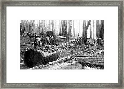 Redwood Logging Crew C. 1890 Framed Print