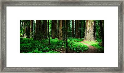 Redwood Path Framed Print by Mark Hammon