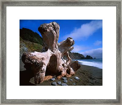 Redwood Roots Framed Print by Ray Mathis