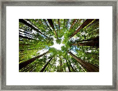 Redwood Sky Framed Print by Benjamin Yeager