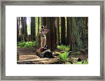 Redwood Symphony   Framed Print