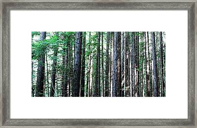 Redwoods 2 Framed Print by Greg Thiemeyer