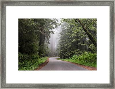 Redwoods In Northern California Framed Print
