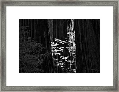 Redwoods Light And Texture Framed Print by Leland D Howard