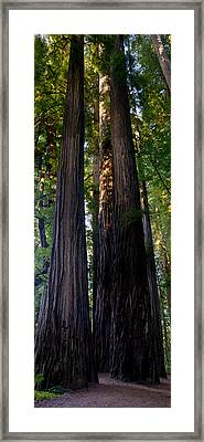Redwoods Vertical Panorama Framed Print