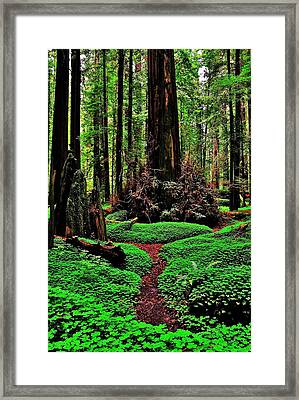 Redwoods Wonderland Framed Print
