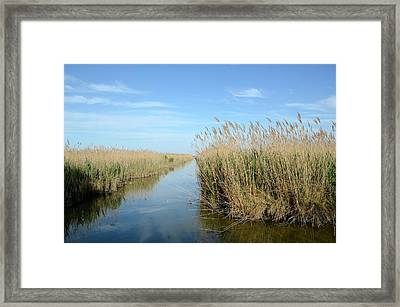 Reed Beds Framed Print by Chris Hellier