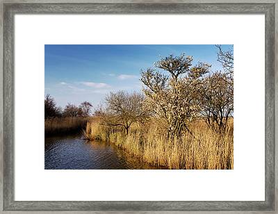 Reed Beds In Winter Framed Print by Bob Gibbons