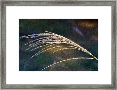 Reed Grass Framed Print by Ludwig Keck
